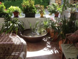 The fish pond in place