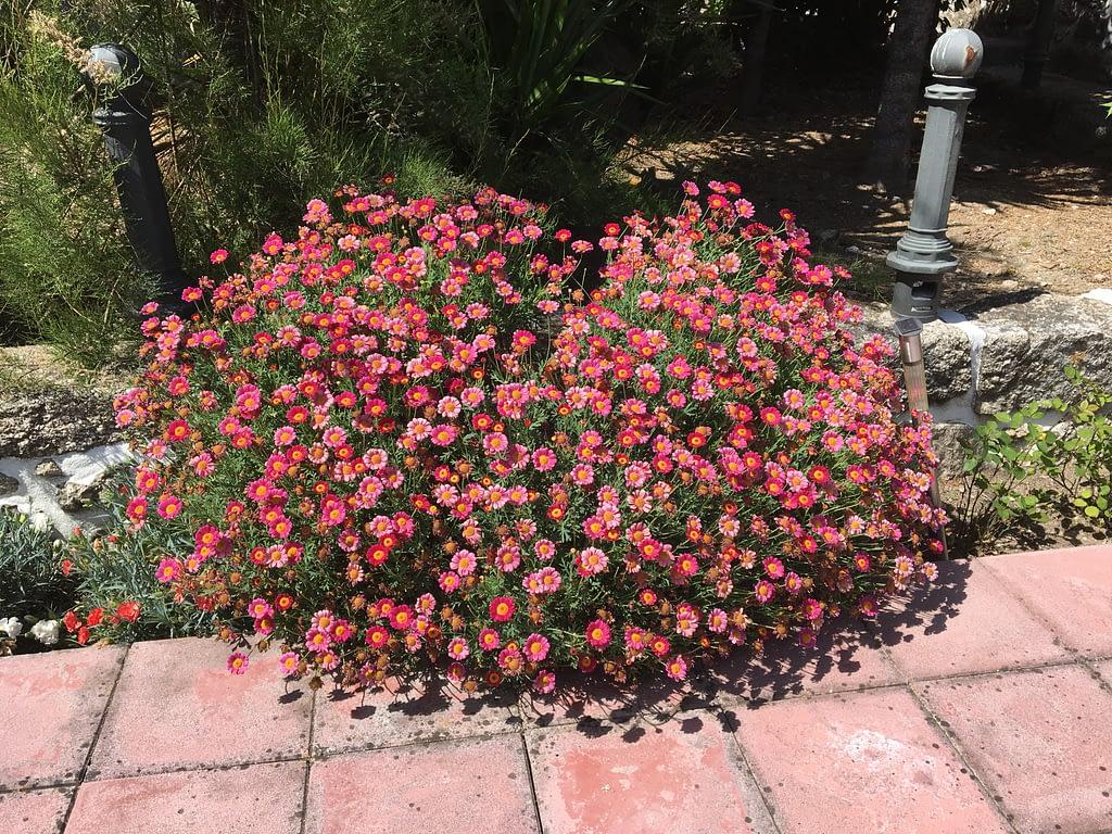 gardening after winter 1