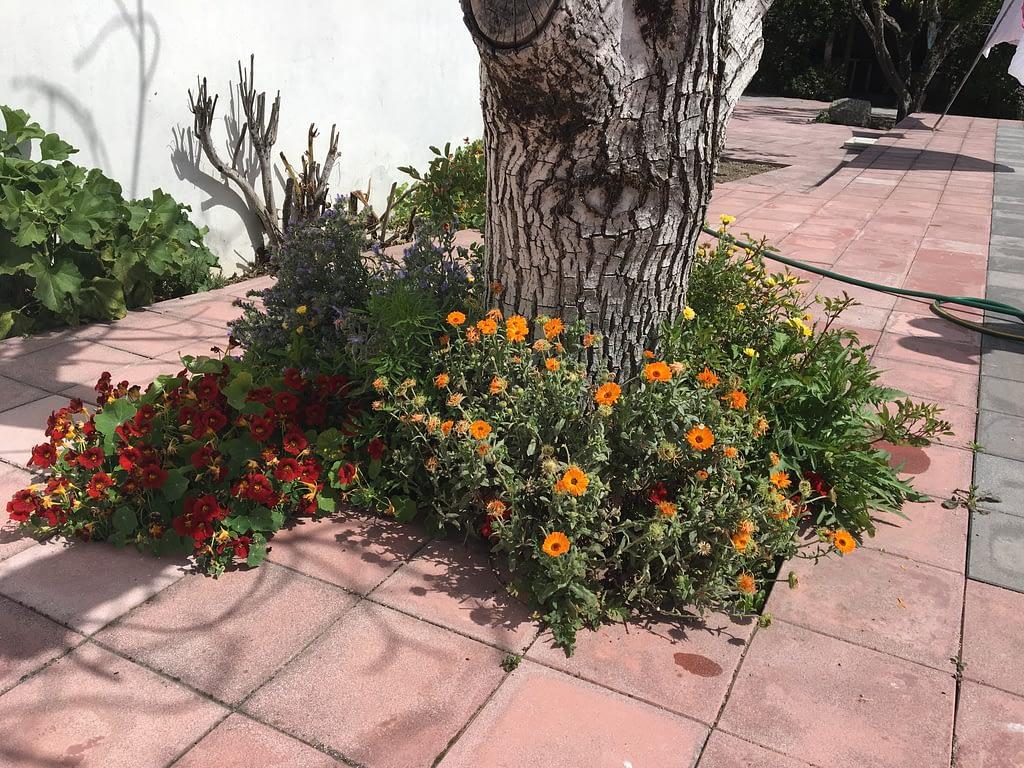 gardening after winter 8